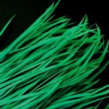 Jade Goose Biot Feathers